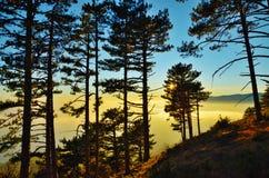 Landschap van zonsondergang in bos bij berghelling stock afbeelding