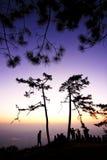 Landschap van zonsondergang met violette hemel en sillouette van pijnboombomen en volkeren Stock Foto's