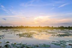Landschap van zonsondergang op lotusbloemvijver Stock Foto