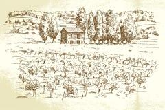Landschap, wijngaard Royalty-vrije Stock Afbeelding