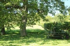 Landschap in wineyards Royalty-vrije Stock Foto's