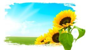 Landschap - zonnebloemen, groen land, blauwe hemel Stock Afbeeldingen