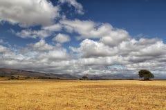 Landschap in Zuid-Afrika Stock Foto