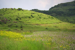 Landschappen en bloemrijke weiden Stock Fotografie