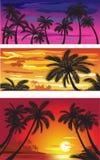 Landschappen met palmen bij zonsondergang Royalty-vrije Stock Foto's