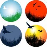 Landschappen met vogels Stock Afbeeldingen