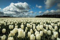 Landschappen in Nederland, Nederlandse landschappen stock foto's