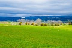 Landschappen in Nieuw Zeeland Royalty-vrije Stock Foto