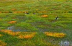 Landschappen op het plateau Stock Fotografie