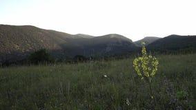 Landschappen van de aardbergen van het heuvel de groene gras stock footage