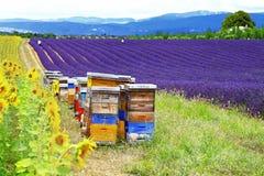 Landschappen van de Provence, Frankrijk Royalty-vrije Stock Foto's