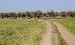 Landschappen van Extremadura het weilandnoorden van de provincie van Caceres Royalty-vrije Stock Foto's