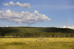 Landschappen van Nakuru Stock Afbeelding