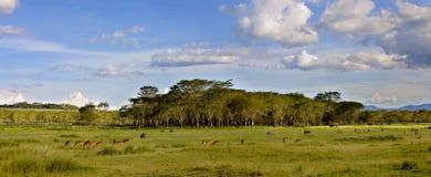 Landschappen van Nakuru Royalty-vrije Stock Afbeelding