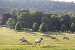 Landschappenplatteland Engeland Stock Foto