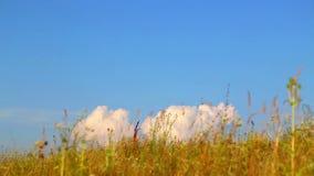 Landschaps blauwe hemel met witte wolken op a van een gebied van gras en bloemen stock video