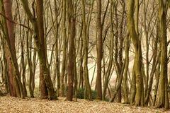 Landschaps oud vergankelijk bos met bomen royalty-vrije stock foto's
