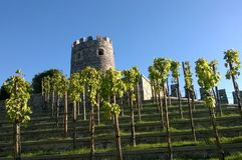Landschaps terrasvormige druiven Royalty-vrije Stock Foto