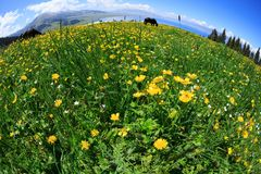landschapsachtergrond met verse gele bloemen op weide Royalty-vrije Stock Foto