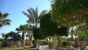 Landschapsarchitectuur met bloeiende bloemen in Egypte Mooie tuin van tropische installaties en bomen in Luxor stock videobeelden