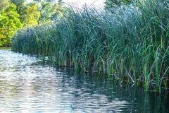 Landschapsbeeld van een kleine rivier schrille en oude bomen Royalty-vrije Stock Afbeeldingen
