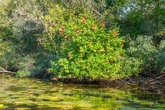 Landschapsbeeld van een kleine rivier schrille en oude bomen Stock Foto's