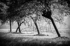 Landschapsboom Stock Foto's