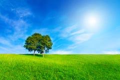 Landschapsboom in duidelijke groene en blauwe aard en zon op blauwe sk Stock Afbeeldingen