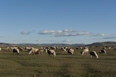 Landschapscategorieën: Fengning: Het landschap van de het Noordenprairie van Peking vooral de Verenigde Staten Royalty-vrije Stock Foto
