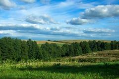 Landschapshemel, bos, heuvels, zonnebloemen royalty-vrije stock afbeelding