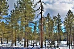 Landschapslandschap, 17 Tusen staten, Vlaggemast aan Phoenix, Arizona, Verenigde Staten royalty-vrije stock foto