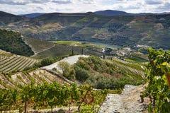 Landschapsmening over de oude wijngaarden en de rivier met rode wijndruiven stock afbeelding