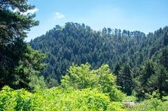 Landschapsmening van de heuvel en het bos Stock Afbeelding
