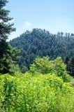 Landschapsmening van de heuvel en het bos Royalty-vrije Stock Foto