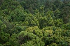 Landschapsmening van droog tropisch altijdgroen bos, Thailand stock afbeelding