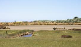 Landschapsmening van het Manawatu-de Estuariummoerasland en vegetatie Royalty-vrije Stock Foto's