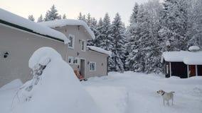 Landschapsmening van het sneeuwdorp in Scandinavië stock footage