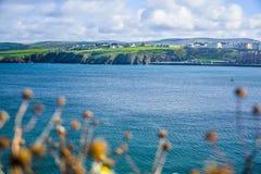 Landschapsmening van kustlijn door een droge bloem stock afbeeldingen