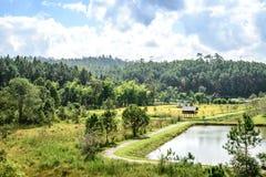 Landschapsmening van pijnboom boschiangmai Thailand Stock Foto