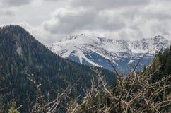Landschapsmening van sneeuwjasna low tatras-berg in Mei Stock Foto