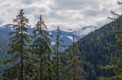 Landschapsmening van sneeuwjasna low tatras-berg in Mei Royalty-vrije Stock Fotografie