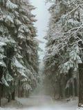 Landschapsmening van snow-covered species in Karpacz tijdens een sneeuwstorm en een blizzard Weergeven van het sneeuwbos stock fotografie