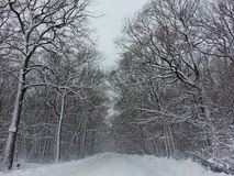 Landschapsmening van snow-covered species in Karpacz tijdens een sneeuwstorm en een blizzard Weergeven van het sneeuwbos royalty-vrije stock afbeeldingen