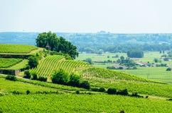 Landschapsmening van wijngaarden dichtbij Saint Emilion, Frankrijk royalty-vrije stock foto's