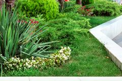 Landschapsontwerp met de bedden van de groenbloem stock foto