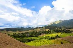 Landschapspadieveld op de heuvel Stock Afbeelding