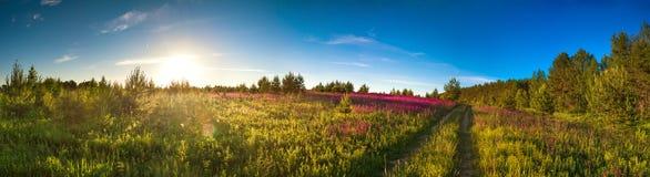Landschapspanorama met de tot bloei komende weide, zonsopgang Royalty-vrije Stock Foto's
