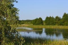 Landschapsrivier en bos Stock Foto