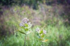 Landschapsscène van het bed van het moerasland, van het moeras, van de stroom of van de rivier met groen Stock Foto's