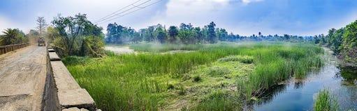 Landschapsscène van het bed van het moerasland, van het moeras, van de stroom of van de rivier met groen Royalty-vrije Stock Fotografie